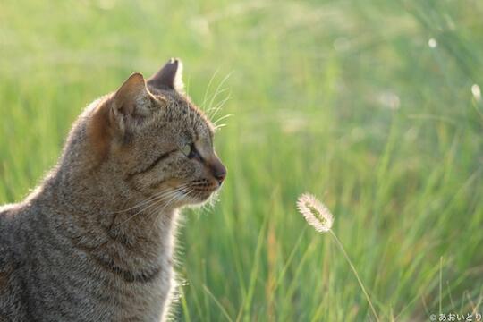 写真家あおいとりさんが撮影した、ダンディズムすら感じる猫の写真