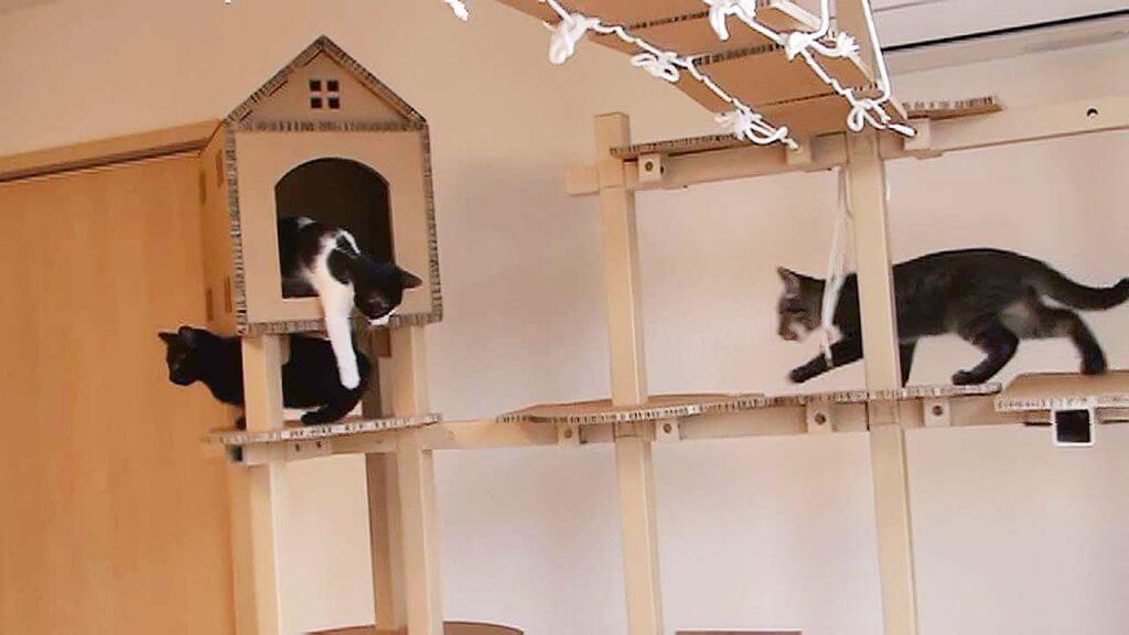 吊り橋キャットウォーク「FitTree(フィットツリー)」で猫が遊んでいるイメージ