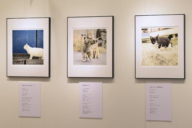 南幅俊輔写真展「老子と猫」の展示風景