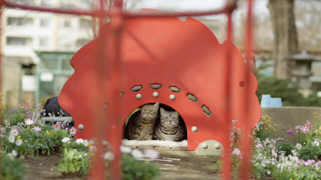 他の猫が住んでいる猫ハウスは気に入らない・・