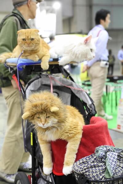 インターペット、愛猫と一緒に来場している様子