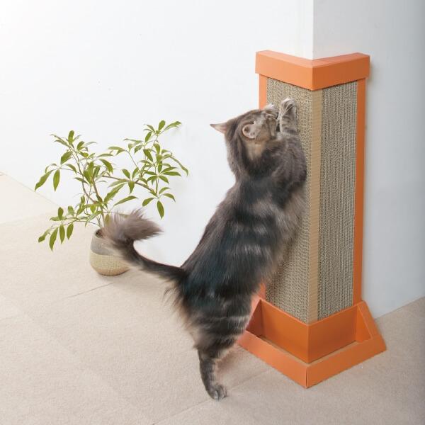 猫の爪とぎから壁を守る対策グッズ