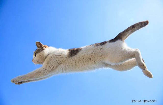 五十嵐健太さんの写真作品、飛び猫