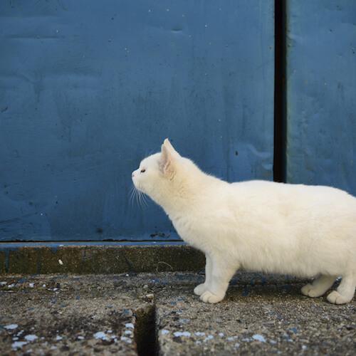 南幅俊輔写真展「老子と猫」の展示作品、白猫の写真