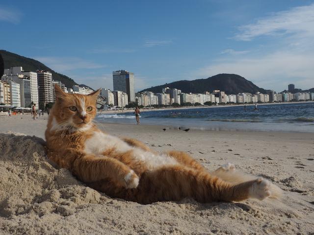 リオデジャネイロのチャトラ猫(岩合光昭 写真集「とらねこ」に収録)