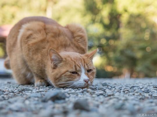 あおいとり氏のネコ写真作品、何かを狙う猫