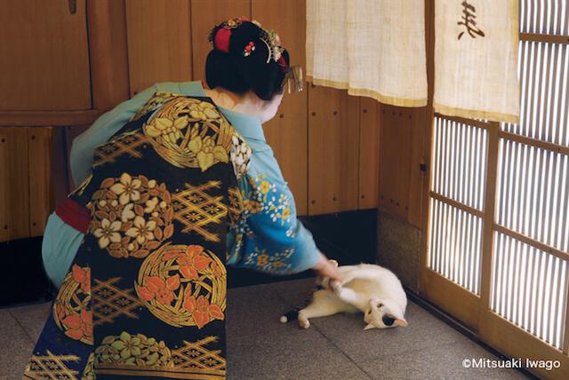 岩合光昭さん「ねこの京都」、舞妓さんと猫