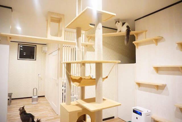 猫カフェmof.mof(モフモフ)の店内