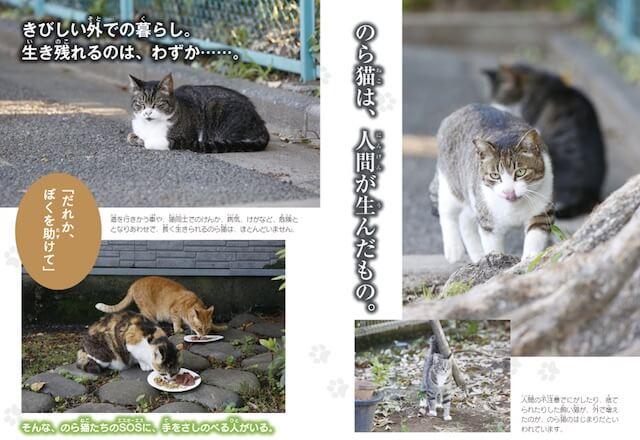 書籍「のら猫の命をつなぐ物語 家族になる日」の野良猫写真