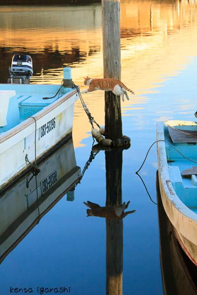 五十嵐健太さんの写真作品、船から船へ飛ぶ猫