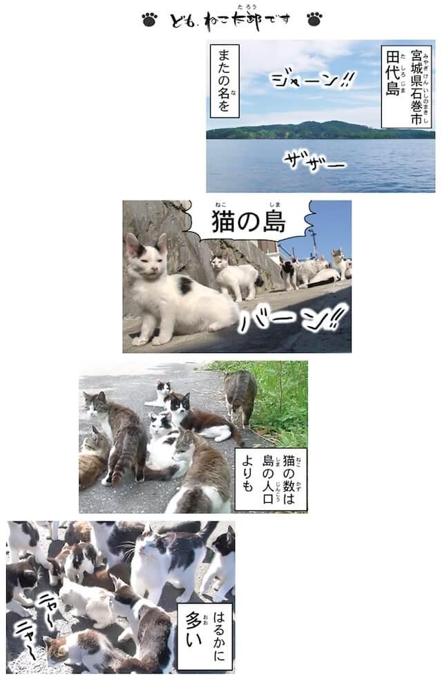 フォトコミック「田代島ねこ便り」誌面イメージ1