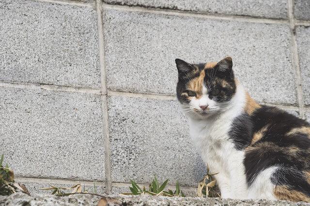野良猫のイメージ写真