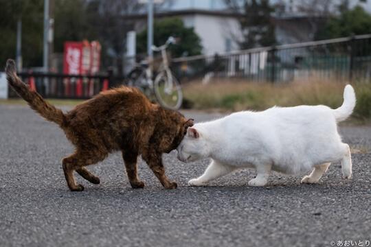 あおいとり氏のネコ写真作品、頭突きし合う猫
