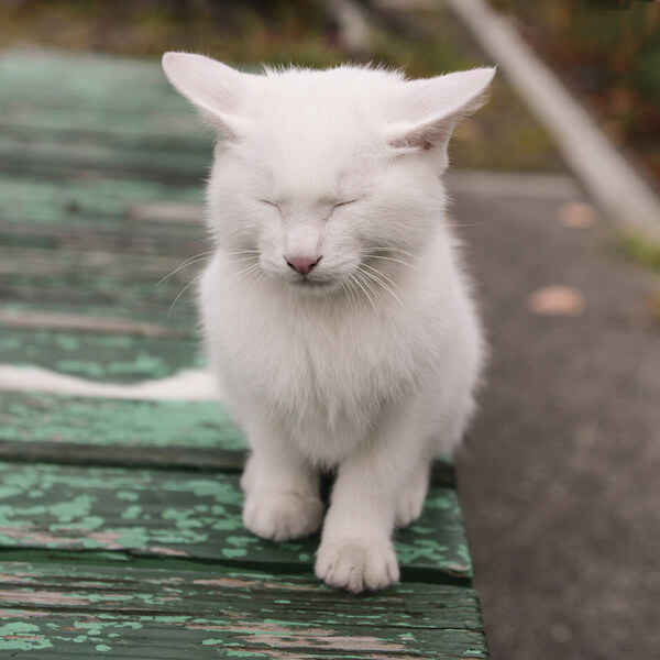 南幅俊輔さんの写真作品、目をつぶる白猫