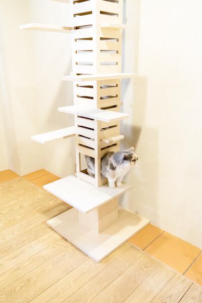 オシャレでスリムなキャットタワー「necobacoT」の穴に入った猫