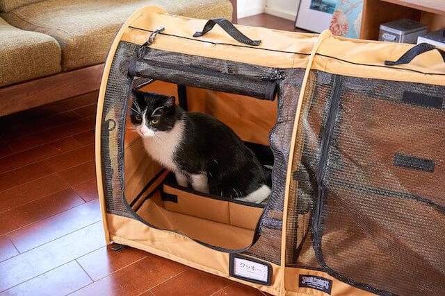 猫キャリーバッグ「ペットツインカーゴ」の中に設置したトイレで用を足す猫