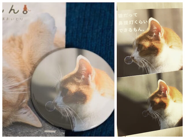 あおいとり氏のネコ写真をデザインした缶バッジ&ポストカード