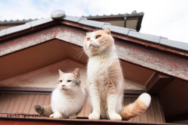五十嵐健太さんの写真作品、もふあつめの猫1