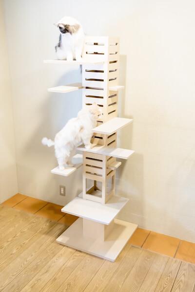猫が高いところから見下ろせるキャットタワー「necobacoT」で猫が遊んでいる様子
