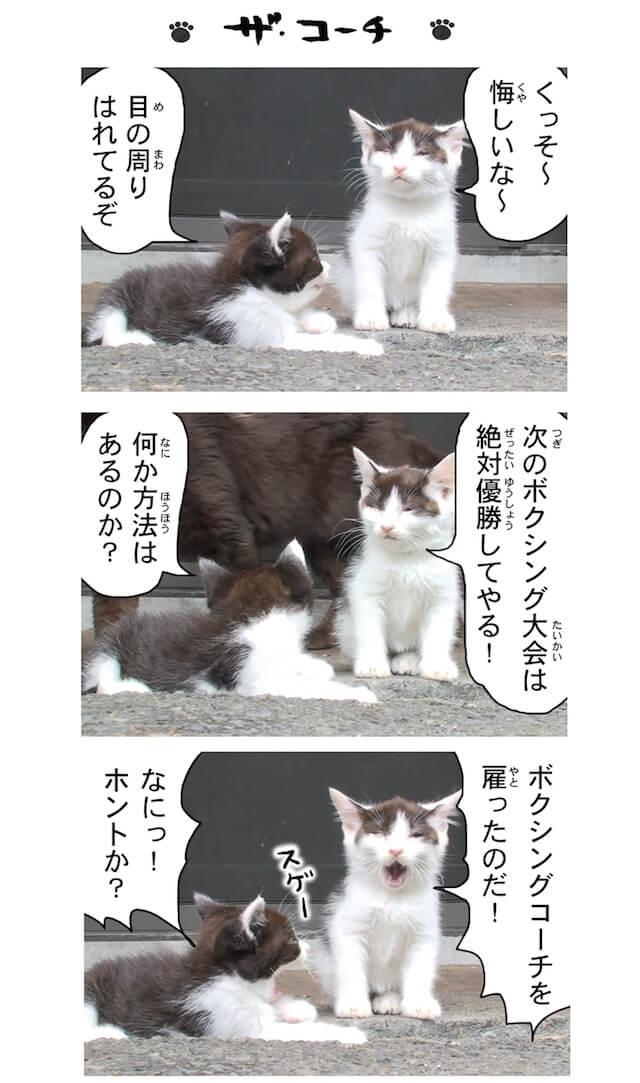 フォトコミック「田代島ねこ便り」猫マンガ誌面イメージ5