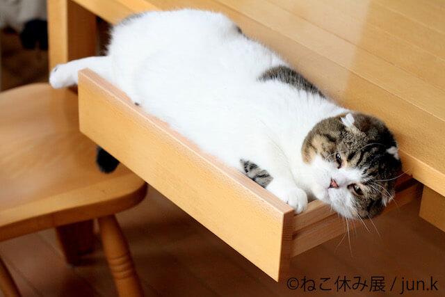 ねこ休み展の展示作品、人気ネコ「どんぐり」の写真