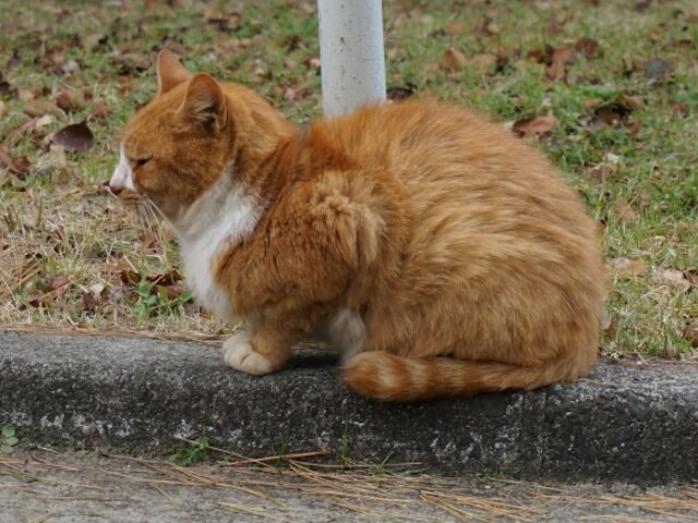八王子市、野良猫の不妊去勢手術助成金の受付を開始