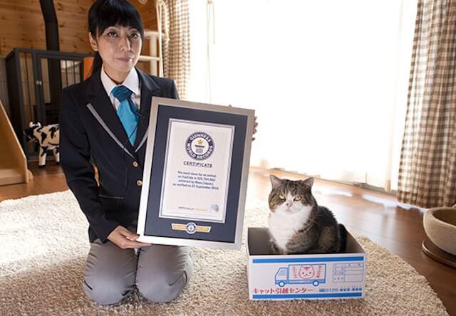 世界一の視聴回数!箱に突撃する猫「まる」がギネス記録に認定