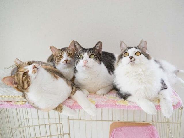 元ペットショップのアニマルライフが保護猫の譲渡会を開催