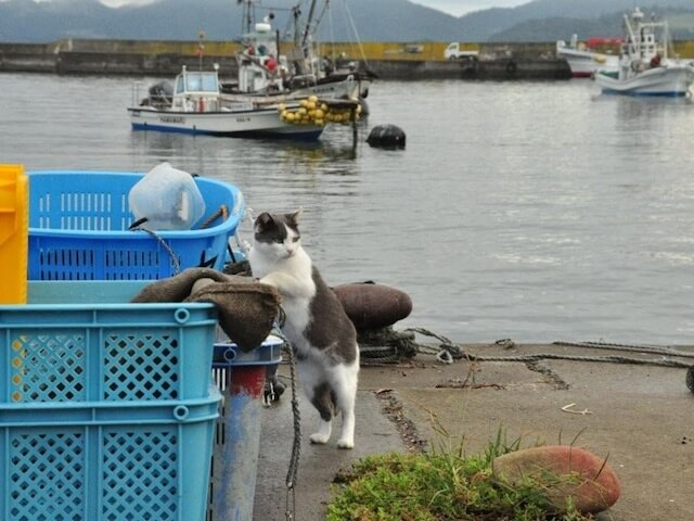 猫島・田代島の漁港にいる猫