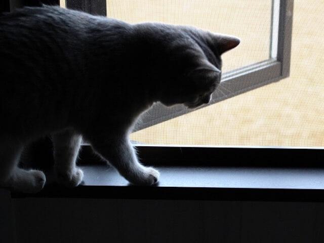 猫の脱走防止アイテム、ナイフでも破れない網戸が登場したにゃ