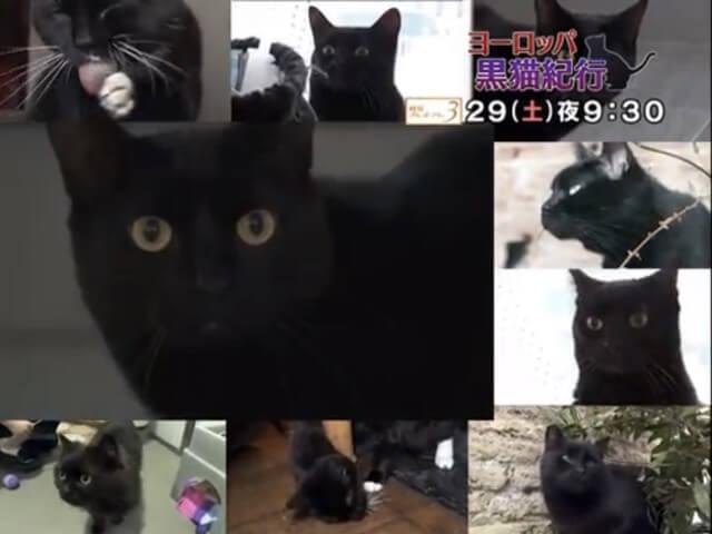黒猫好きは必見、NHKで「ヨーロッパ 黒猫紀行」が放送予定