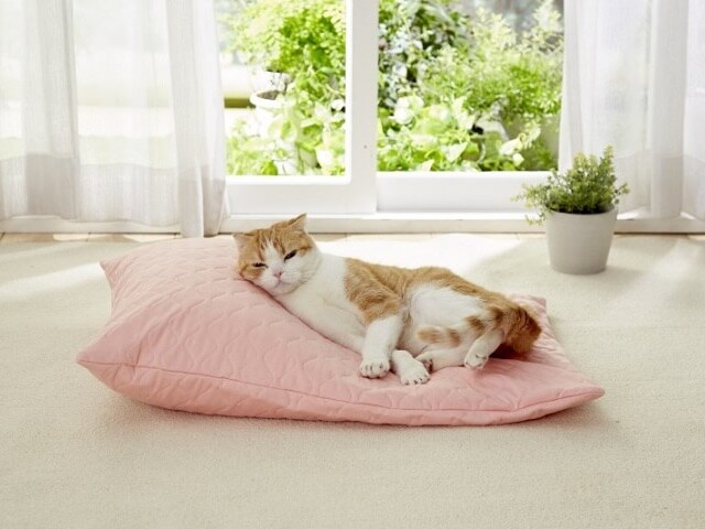 老猫介護に最適、愛猫好みのカタチに変形できるクッションが登場