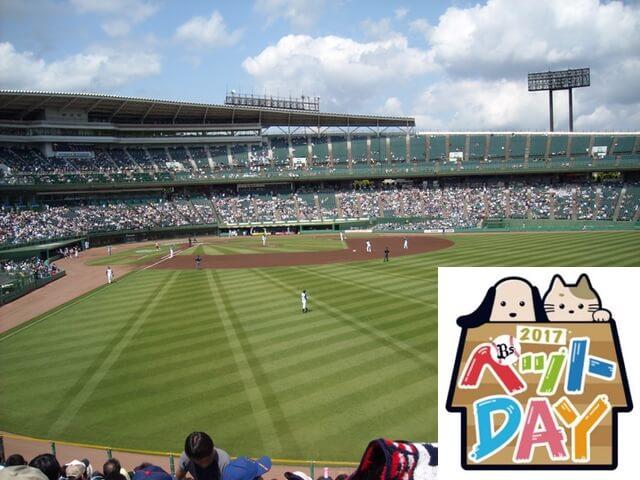 プロ野球で犬猫と同伴入場できる試合が開催!今年は譲渡会も