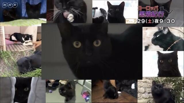 NHKのBSプレミアムで放送「ヨーロッパ 黒猫紀行」