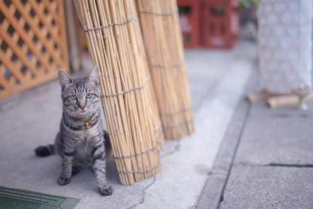 迷い猫のイメージ写真