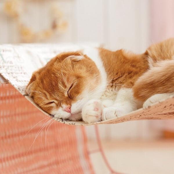 ハンモックで寝る猫