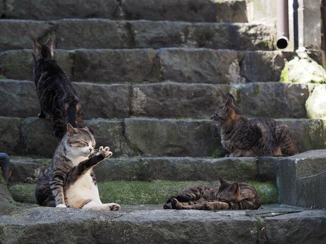 岩合光昭氏写真集「ネコとずっと」に収録されている自然体な猫たち