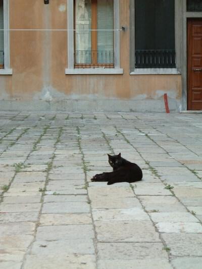 ヨーローッパの黒猫に迫るテレビ番組