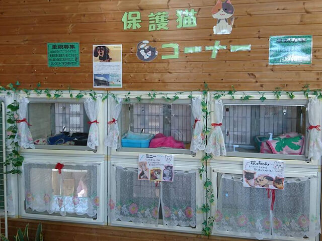 アニマルライフの保護猫コーナー