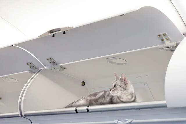 猫のエイプリルフール、エア・カナダのニャーストクラス