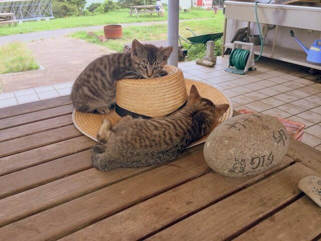 田代島でのんびり暮らす猫たち