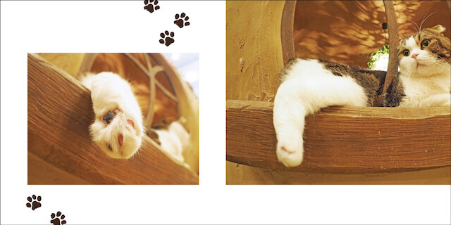 写真集「にゃ~ん手ね」、猫の後ろ足写真