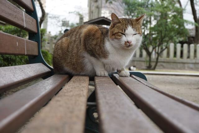 お寺にいる猫のイメージ