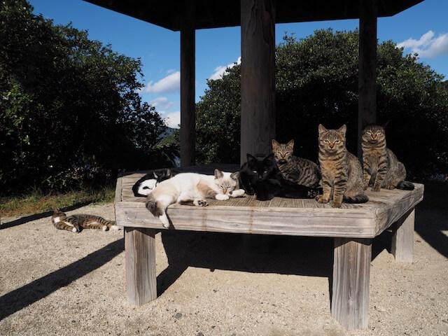 岩合光昭氏写真集「ネコとずっと」に収録されているベンチにたむろする猫たちの写真