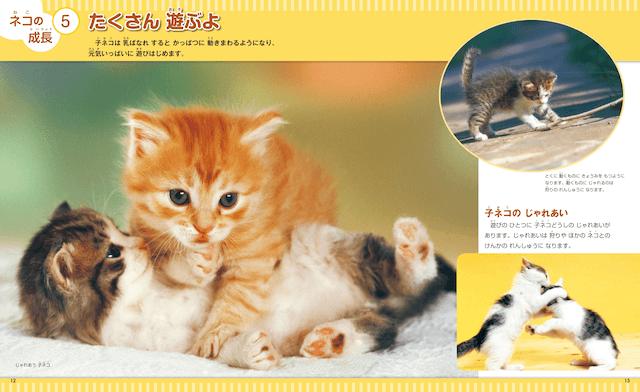書籍「なぜ?の図鑑 ネコ」子猫の成長過程
