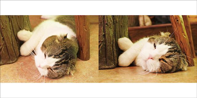 写真集「にゃ~ん手ね」に登場する猫