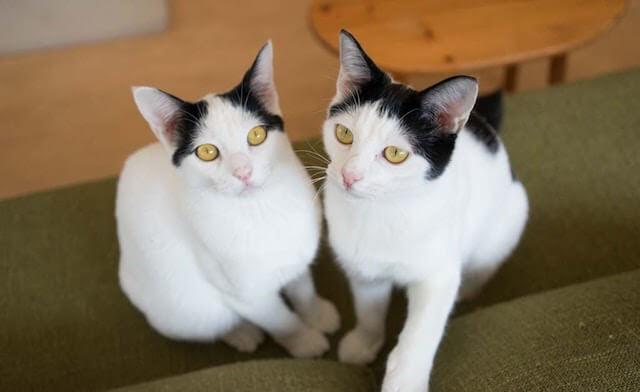 ペットライフの保護猫たち