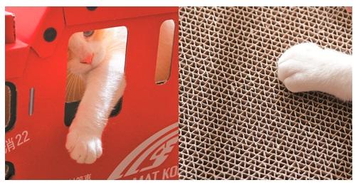 消防車型の爪とぎ付きボックスで遊ぶ猫