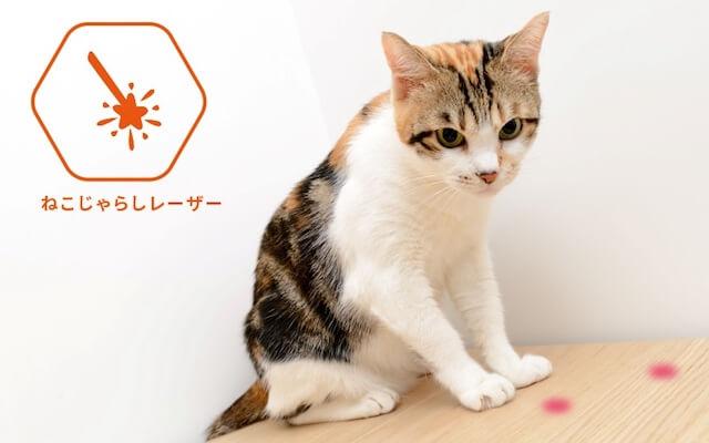 遠隔操作でレーザーポインターで愛猫と遊べるワイヤレスカメラPAWBO+(パウボプラス)