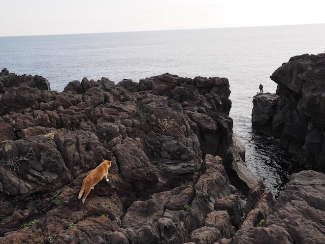 岩合光昭氏写真集「ネコとずっと」に収録されている海辺の崖に立つ猫の写真